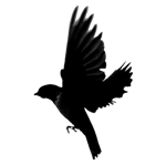 transparent_logo-Custom1